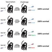 Science Translational Medicine: UBIVE publication on Lassa fever vaccine